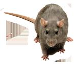 Mice-Roll_03