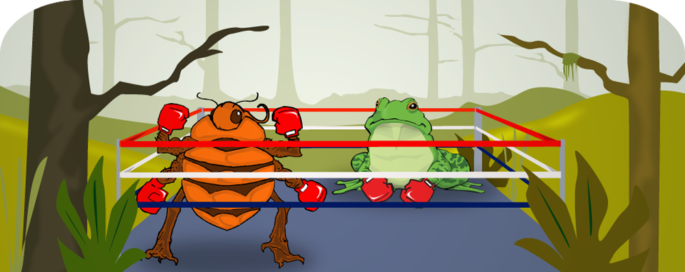 Bed Bug and Bullfrog in the Ring