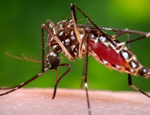 Mosquito prevention can protect you and your family from disease