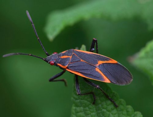 Prepare for overwintering pests during the fall season