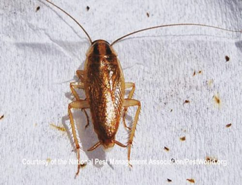 Anatomy of a Cockroach: Know your Enemy