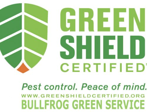 Proactive Measures in eliminating pests and rodents
