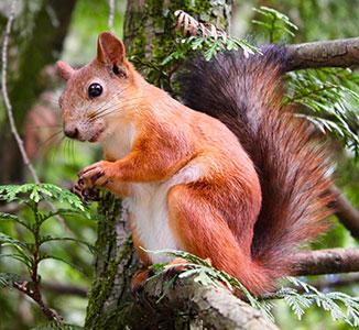 Adventurous squirrel