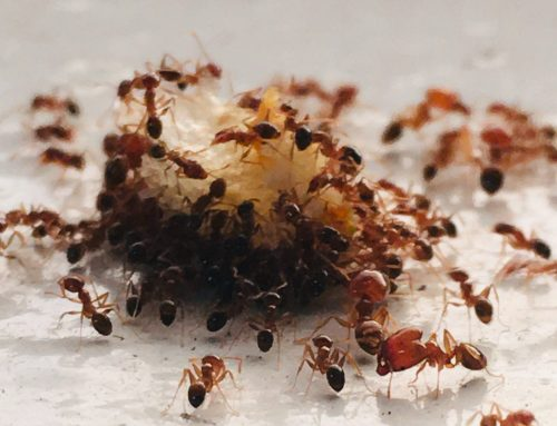 Ants continue their march through Spring